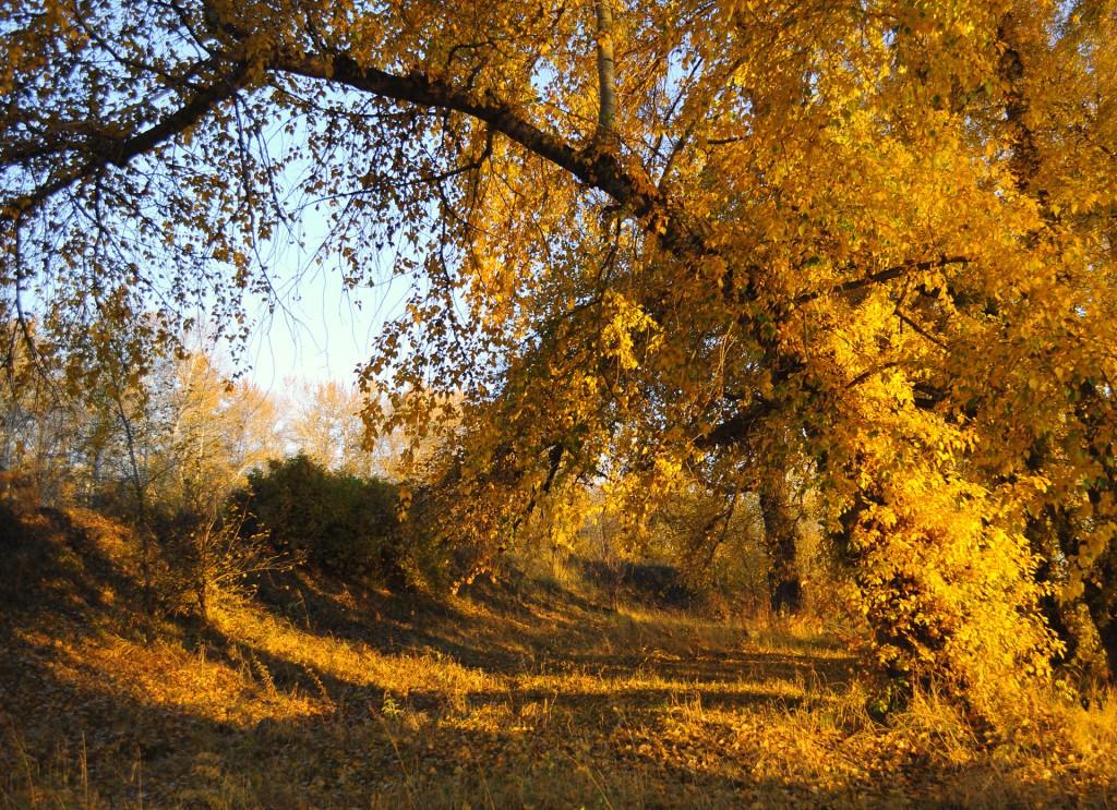 autumn_landscape